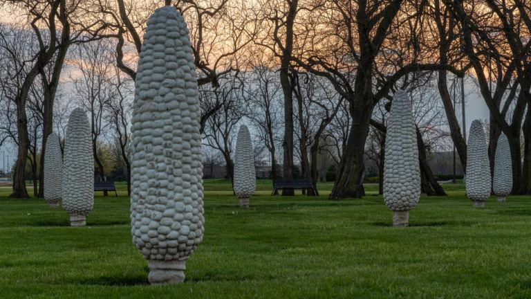 Field of Corn in Columbus, Ohio.