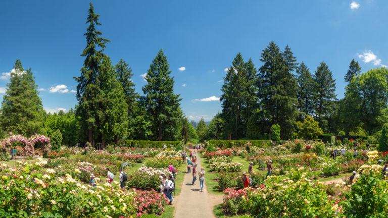 Rose Garden in Portland, Oregon. Photo: Shutterstock.