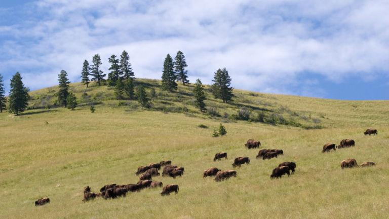 National Bison Range, Montana. Photo credit: Shutterstock.