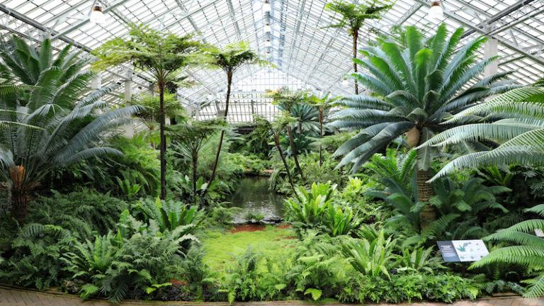 Garfield Park Conservatory in Chicago. Photo credit Shutterstock.