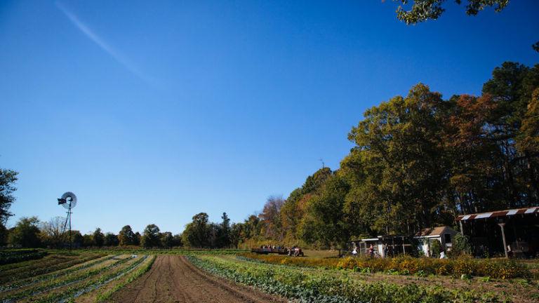 Silverton Farms