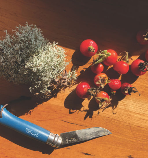 Rosehips and reindeer moss. Words and photos by Katy Severson.