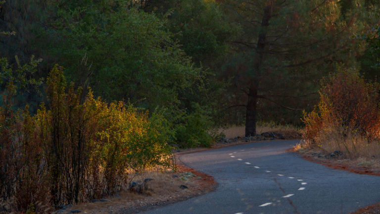 The American River Parkway in Sacramento, Calif.
