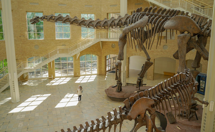 Fernbank Museum of Natural History in Atlanta. Photo by Shutterstock.