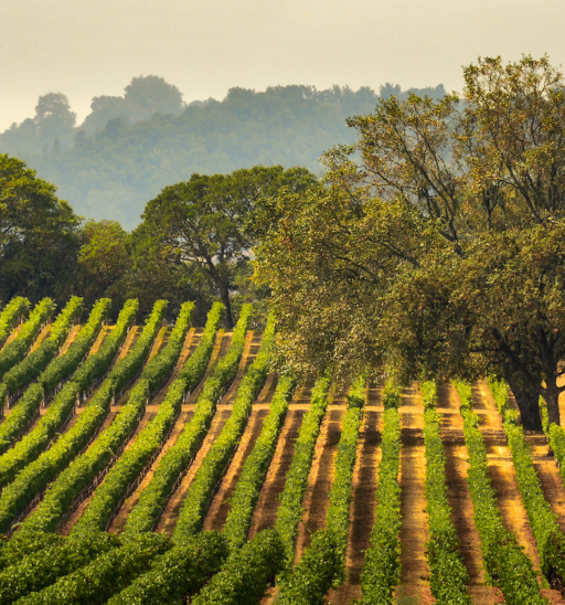 Sonoma County. Photo via Shutterstock.