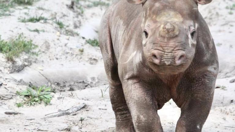 Sedgwick County Zoo in Wichita, Kansas. Photo via Shutterstock.