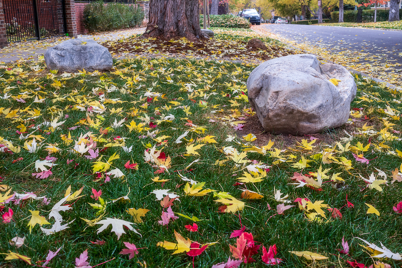How is fall foliage affected by climate change